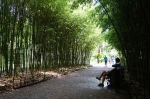 Одна из бамбуковых рощ, где мы сидели и наслаждались прохладой