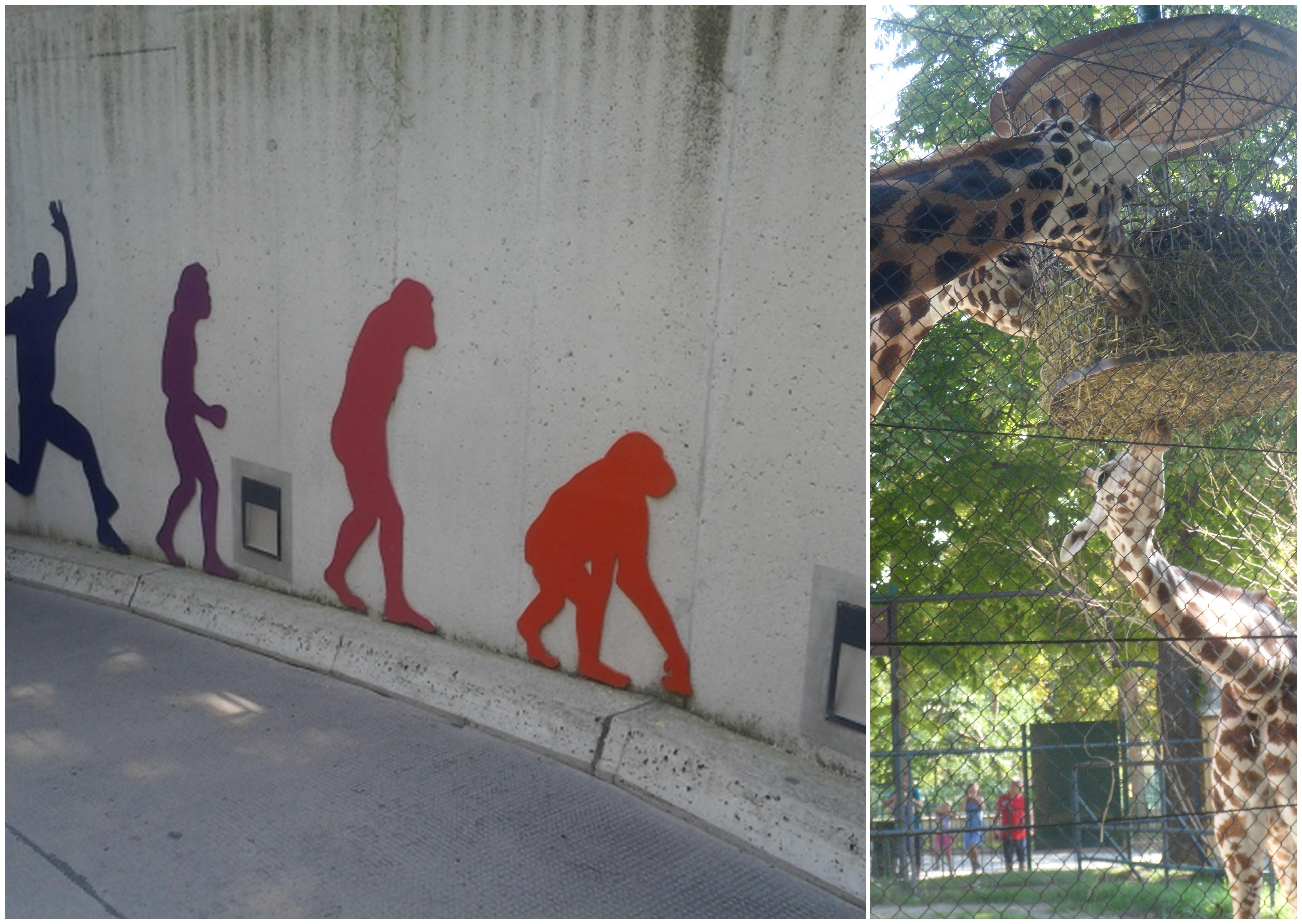 Планета обезьян - эволюция!