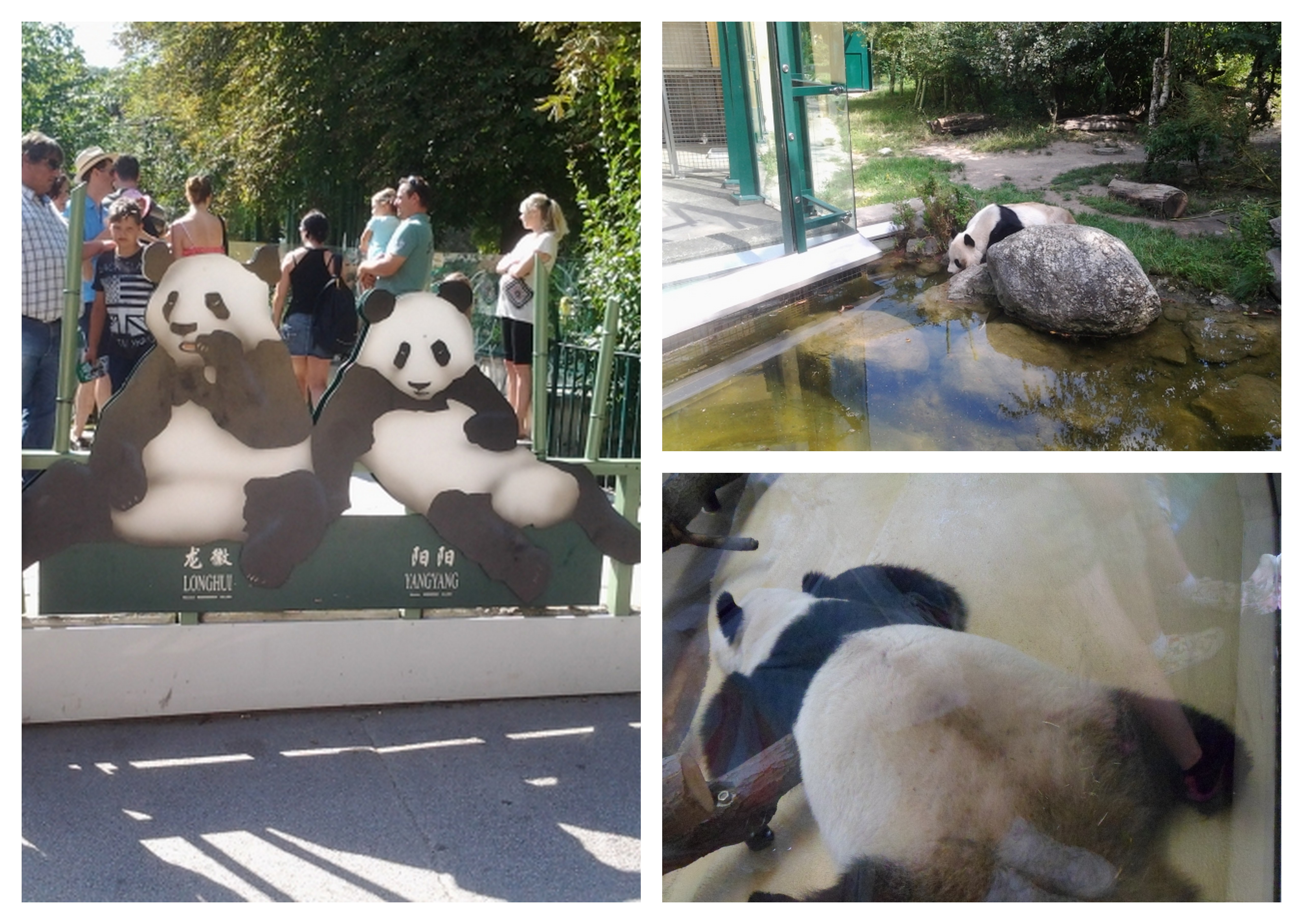 Одну из панд зовут LongHui