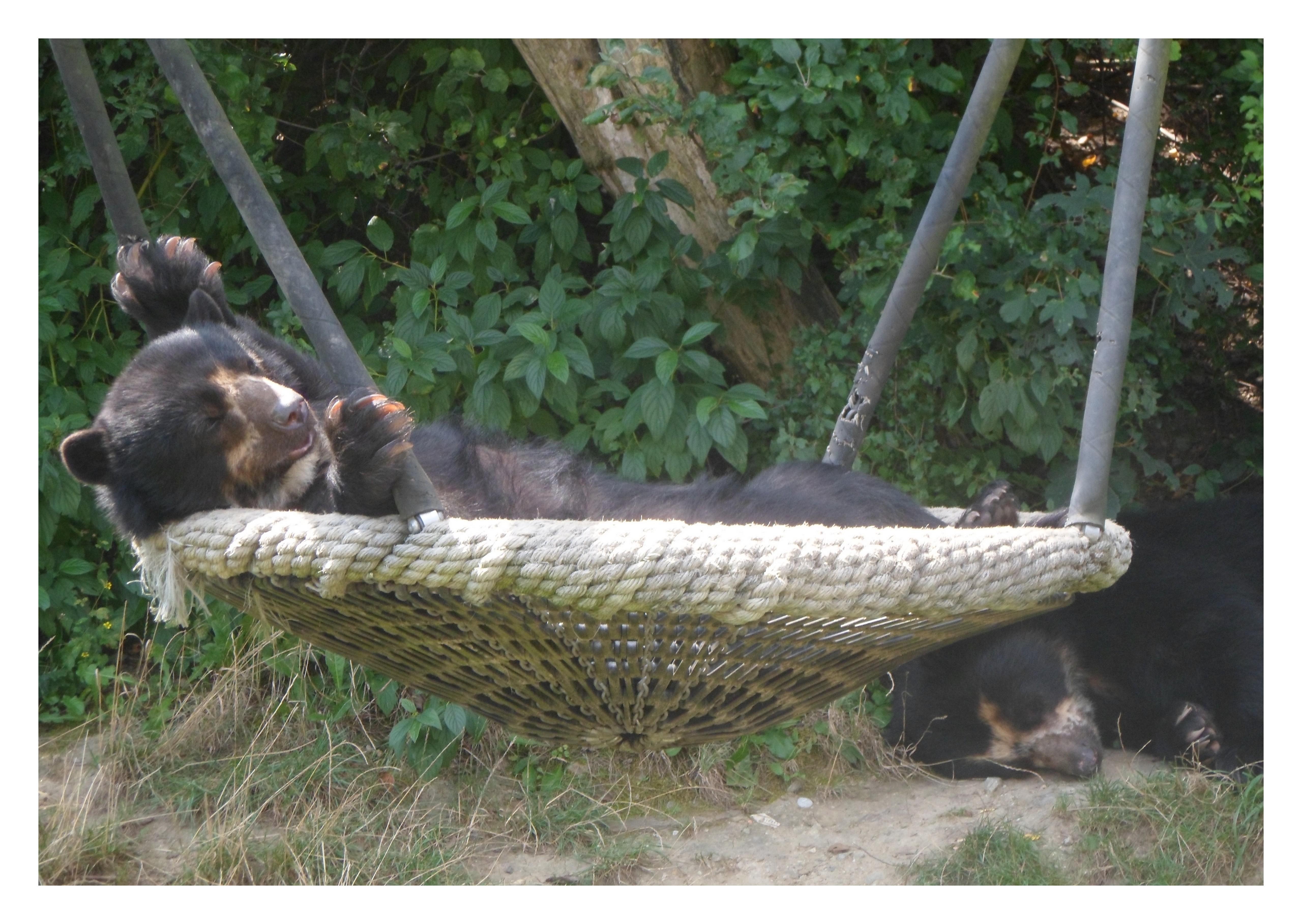 Медведь в Венском Зоопарке