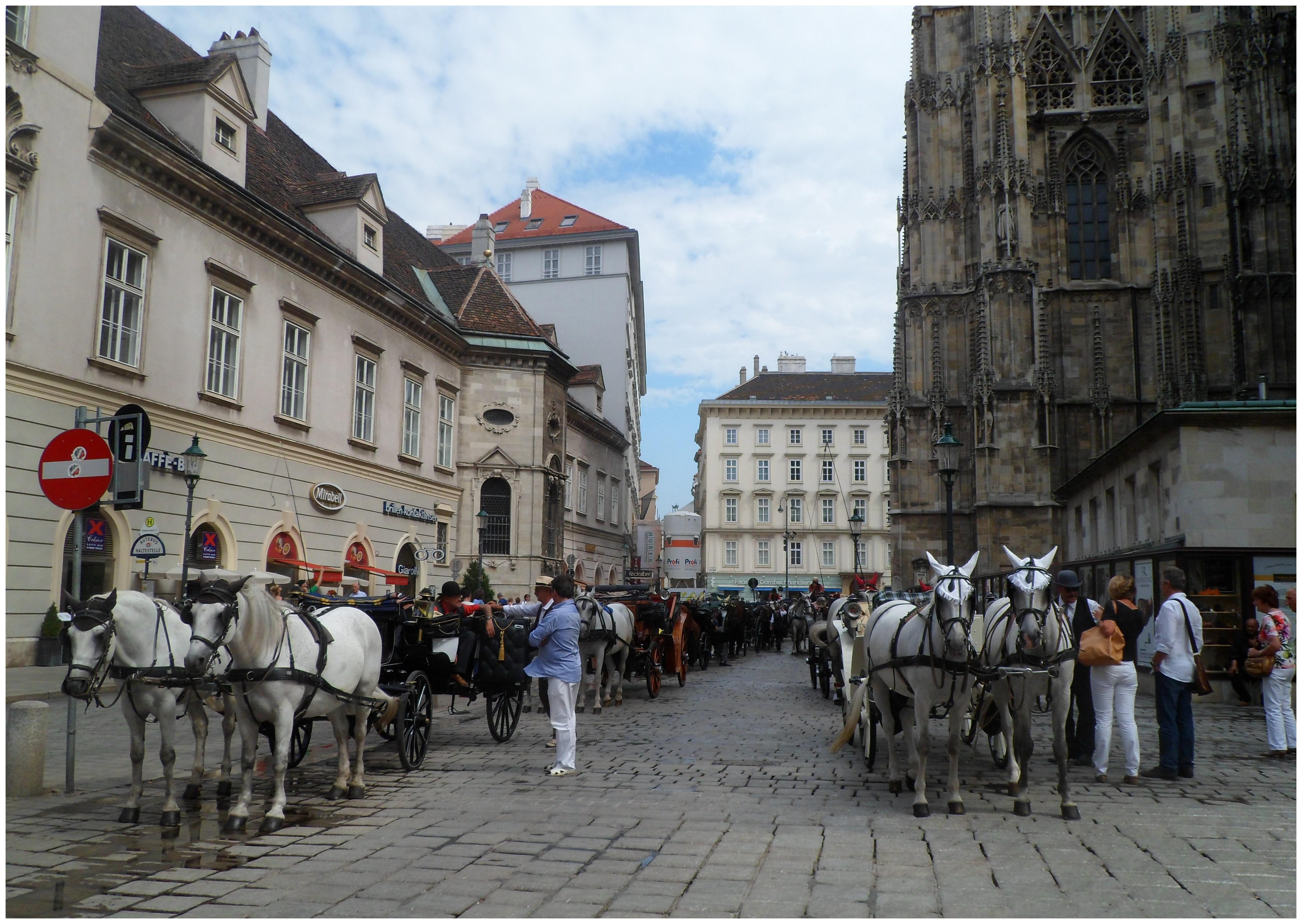 Лошади носят специальные мешки, чтобы улицы оставались чистыми