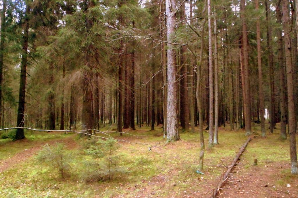Дорога к зубровнику проходит через замечательный лес
