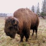 Кормление животных в Ленинградской области