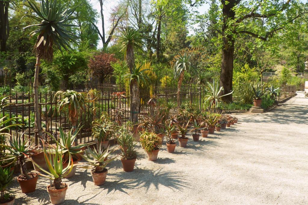 растения падуанского ботанического сада