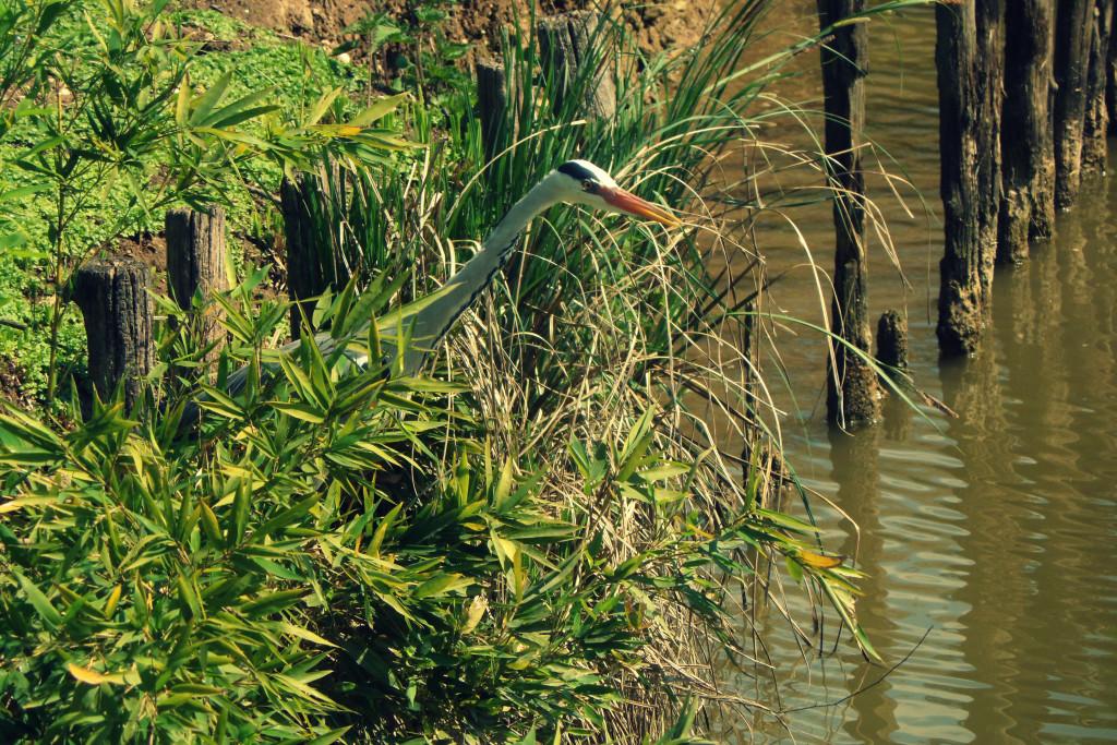 птицы парка Кверини